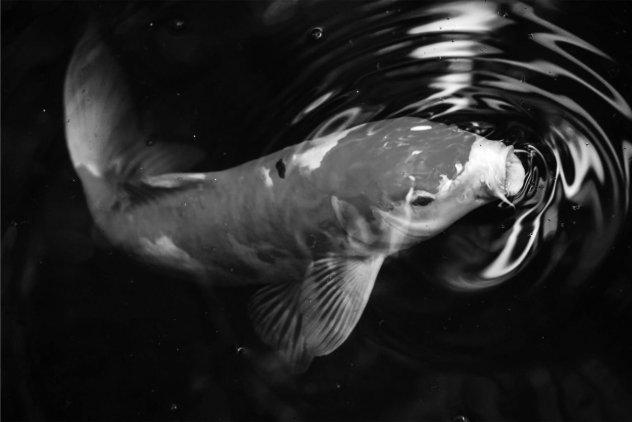 pesce che respira