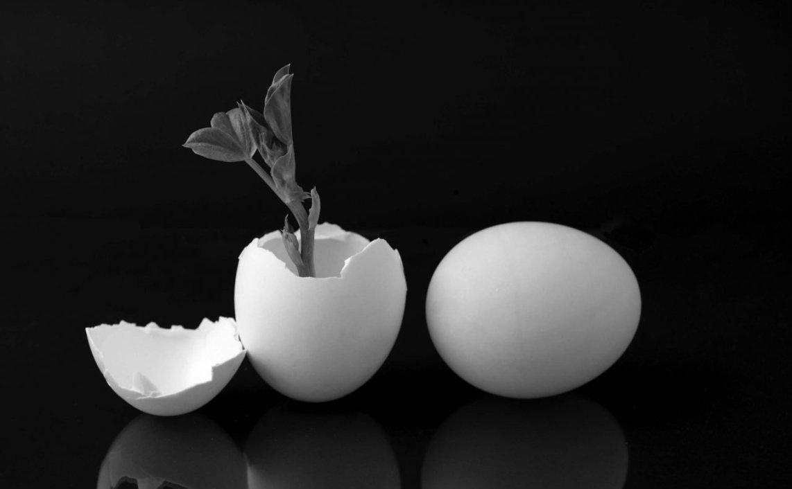 eggs giving life to a plant