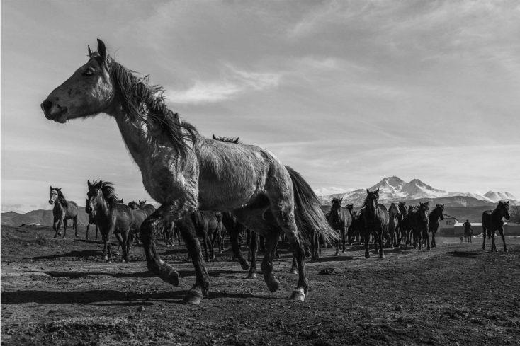 cavalli senza ancore