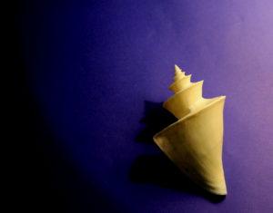Japanese wonder shell photography, Japanese wonder shell photos, seashell photography,