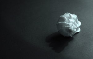 Epitonium scalare photos, Epitonim scalar photography, seashell photography,