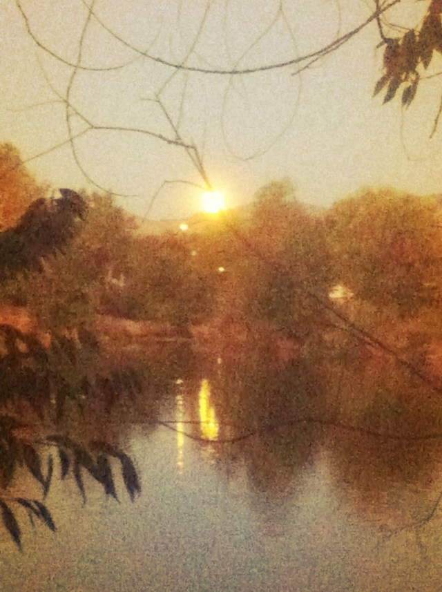 And this is a harvest moon rising at the ponds where we walk Denny just by our house.  it looks like a sun rise, the picture is cool but does no justice, it was neato