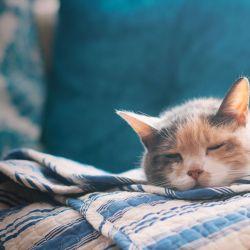 Acordar de manhã é um drama? 5 maneiras de se levantar bem
