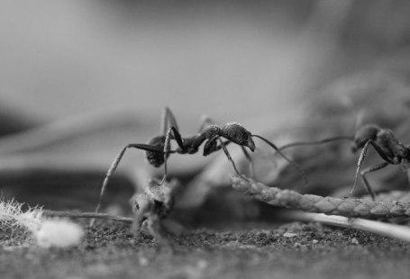 A batalha minimalista contra gastos formiga