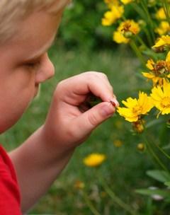 Young boy exploring the backyard