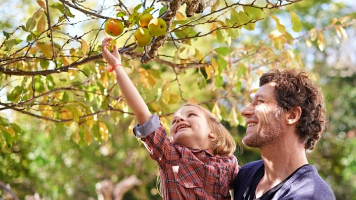 Lesson: Good and Bad Fruit (Luke 6:43-45)