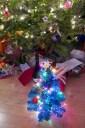 120446_kids_tree