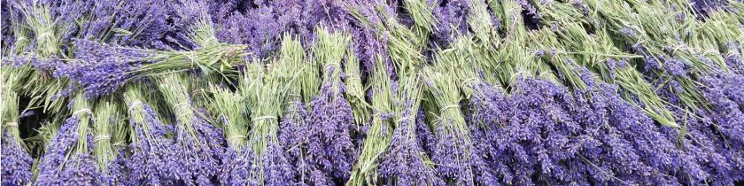 Lavender Hill Farm also offers a U-Cut Tour for a small additional cost.