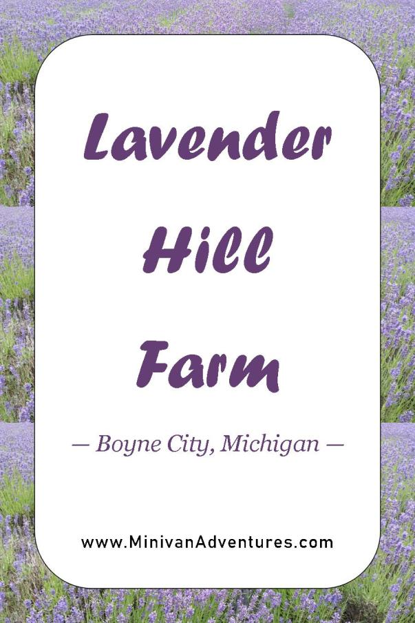 """Add a visit to Lavender Hill Farms to your Michigan Summer Bucket List. Take the tour, wander its labyrinth, snag some great pictures, swing on the rope swing, and treat yourself to a lavender soda while you are there. This is a """"Pure Michigan"""" adventure you won't want to miss."""
