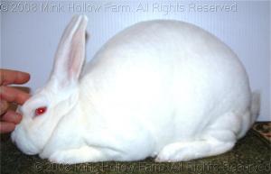 pinky-2008-12-07-038