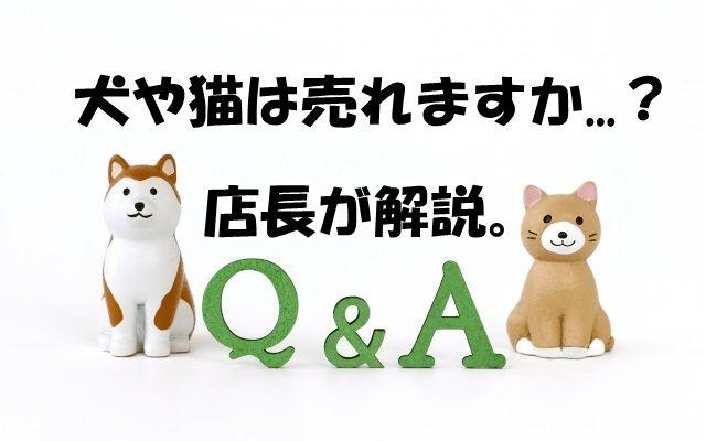 犬や猫は売れますか?リサイクル店の店長が解説します。