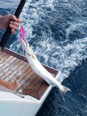 72017 1st fish on boat barracuda