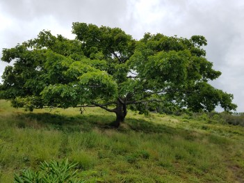 Blue ridge mts craggy gardens hike2 7317