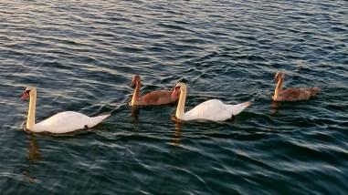 8817 swan family montauk ny