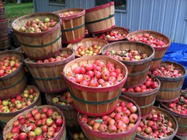 Dumas Apple House Donations