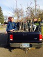 Mobile Orchard