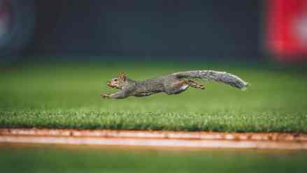 Rally Squirrel Blesses Twins with 11 Runs in Victory Over White Sox
