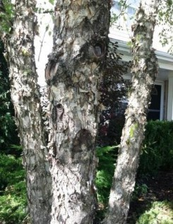 tree front close