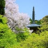 京都: 春から夏へ(神護寺)