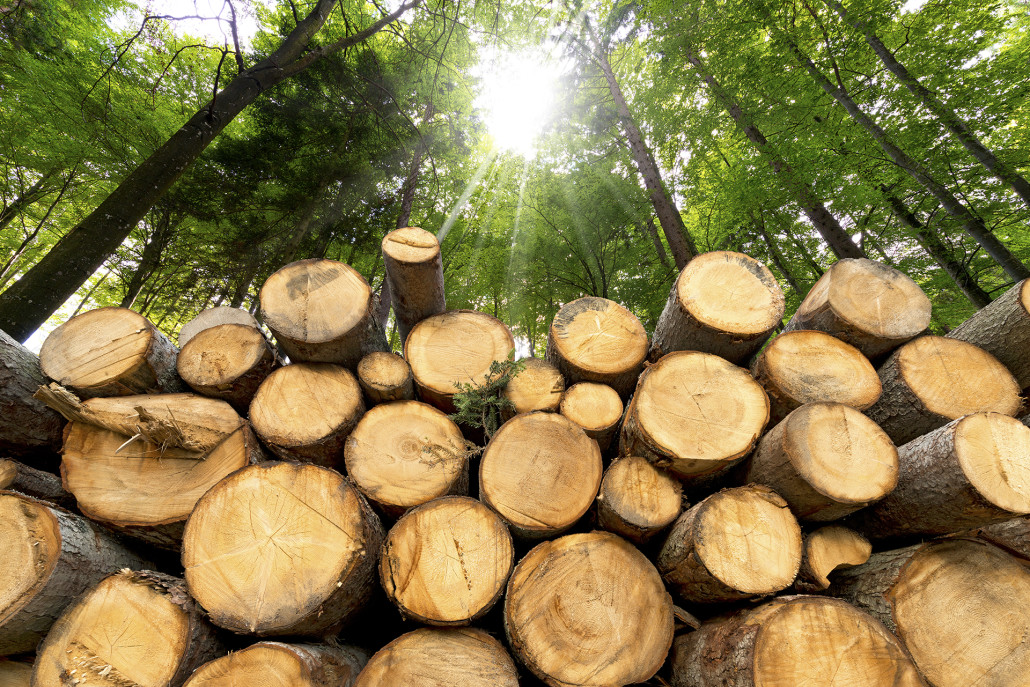 legno da serramenti
