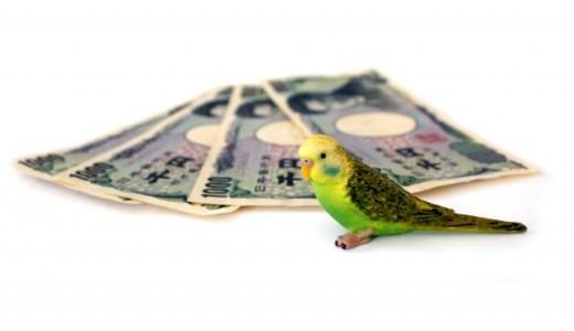 【ふるさと納税】4000円でもらえるものは?おすすめジャンル2019!
