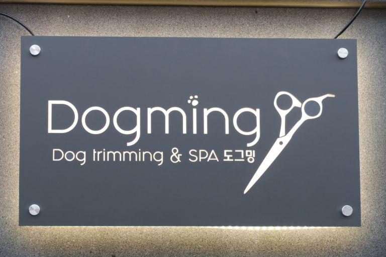 도그밍-4