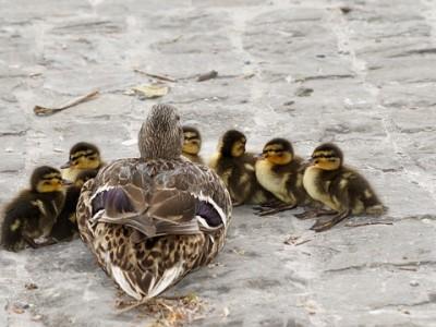 親鳥と子鳥
