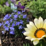 花壇のお花を植え替えました