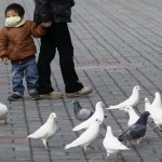 My neighbour's got the flu: Bird Flu