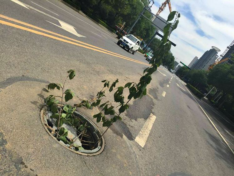 China: Just a man-hole in the middle of the street! #Howlonghasthattreebeengrowing.... Photo courtesy of Mike Breeze