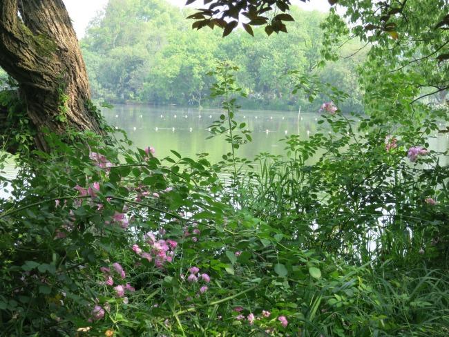 Visiting China - Hangzhou's West Lake