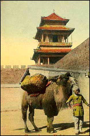 Xi'an Silk Road Camels