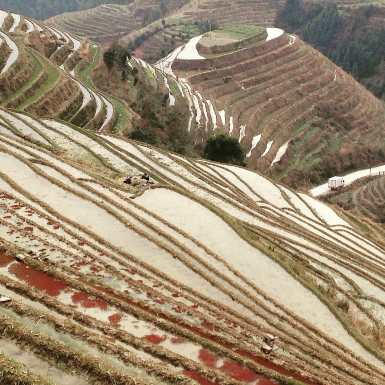 Guilin Rice Terraces