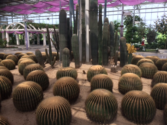 Cacti in Greenhouses Xi'an