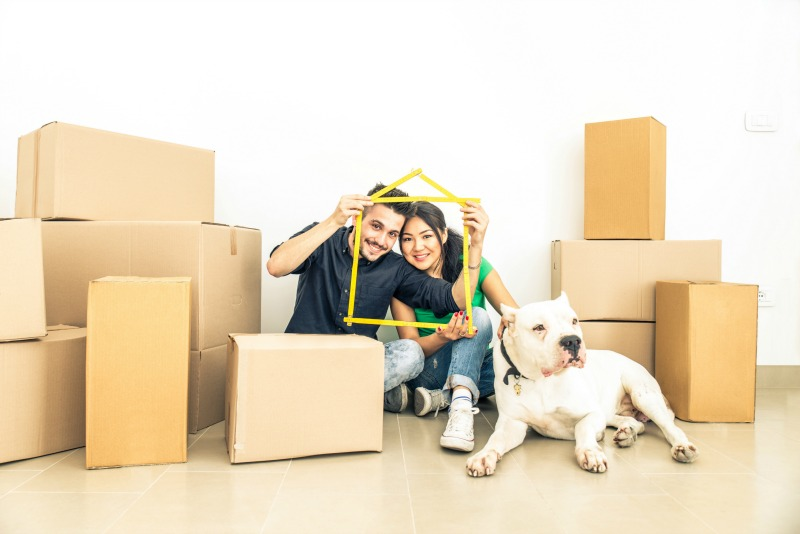 repatriating your pet