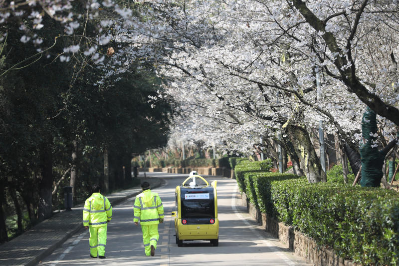 Wuhan Cherry Blossoms