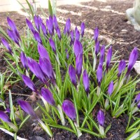 Vårens färger