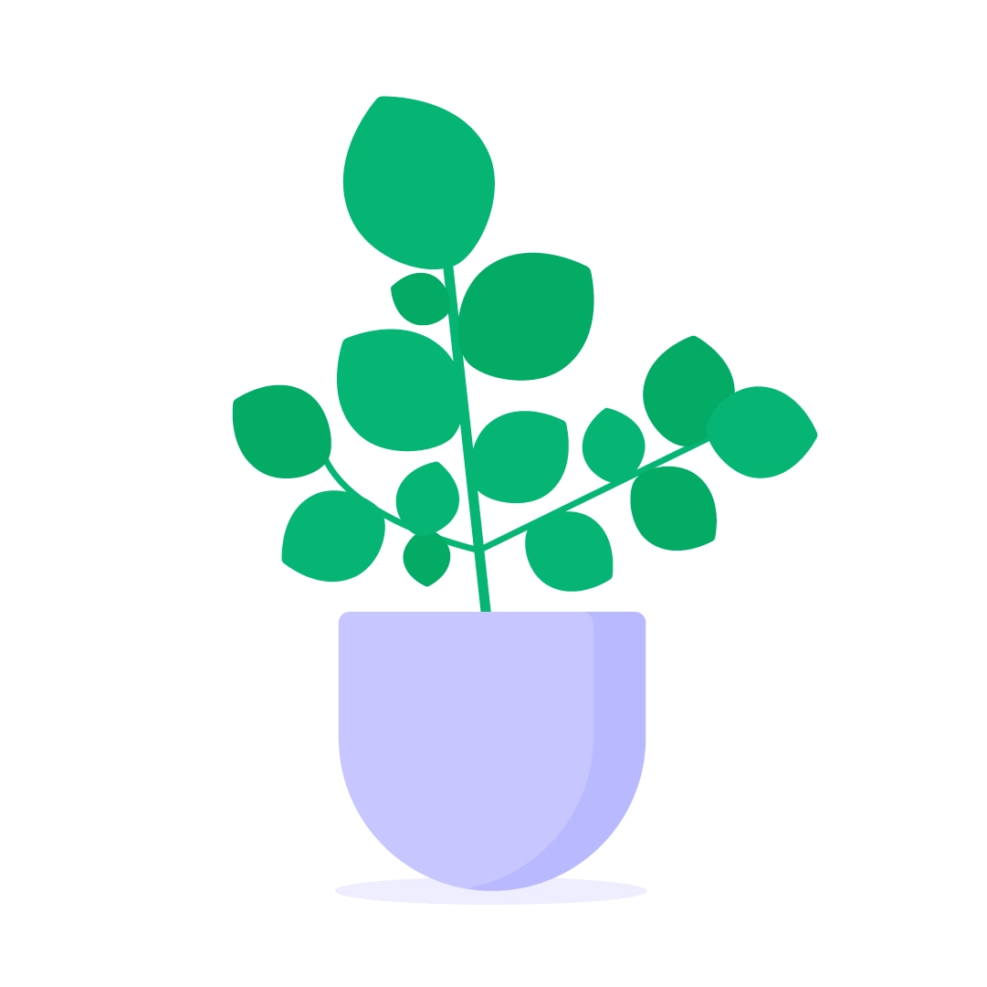Vector illustration of a Clusia Rosea Plant in flat design style