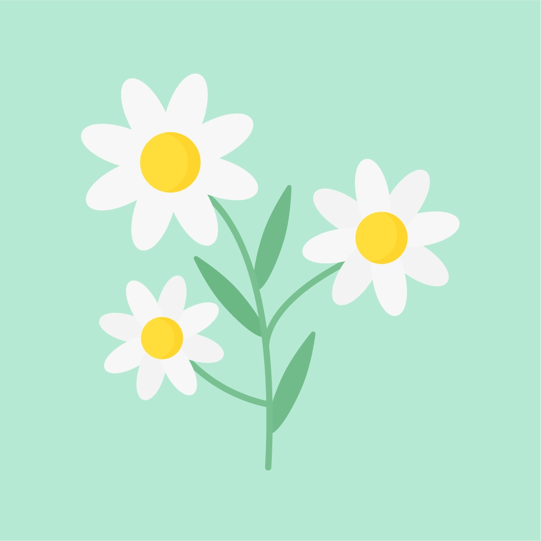 Vector illustration of a daisy flower in flat design style