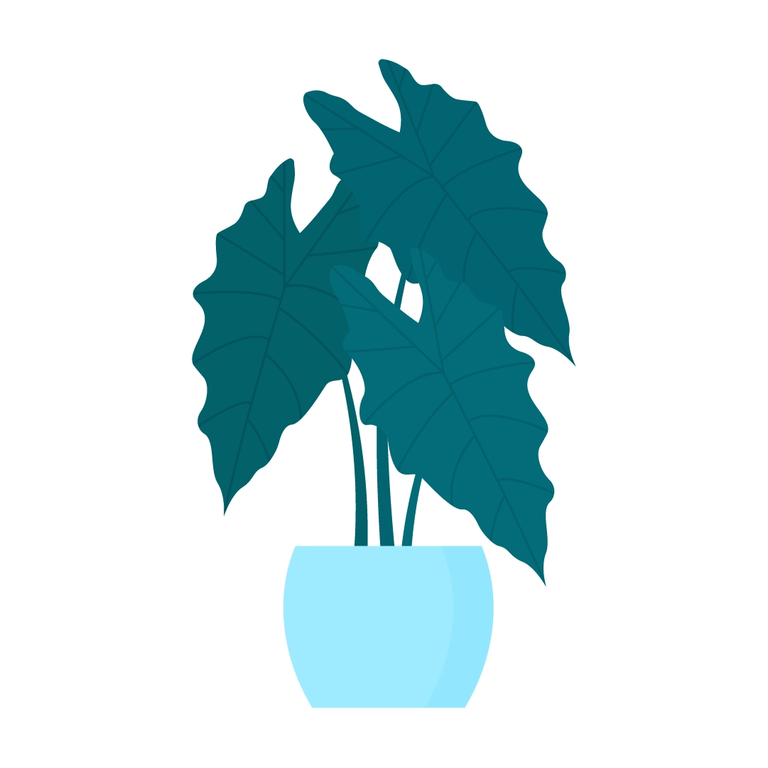 Vector illustration of Alocasia Amazonica - Elephant Ear Plant in flat design style
