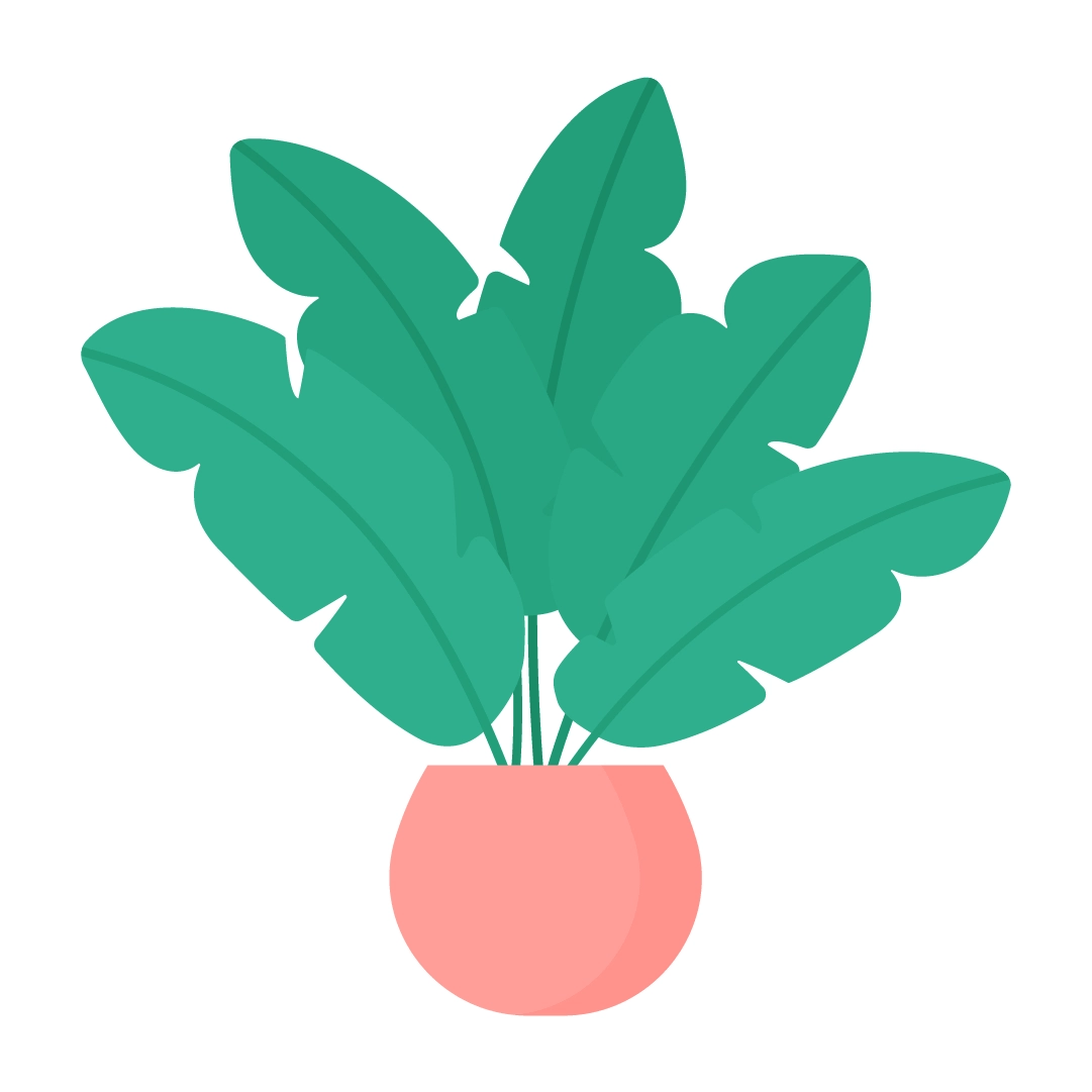 Vector illustration of a Banana plant - Musa Tropicana in a terracotta pot in flat design style