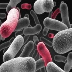 Kontaktläätsede hooldusvedelik eemaldab bakterid
