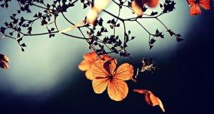 flowers g4ccaa9fe9 640