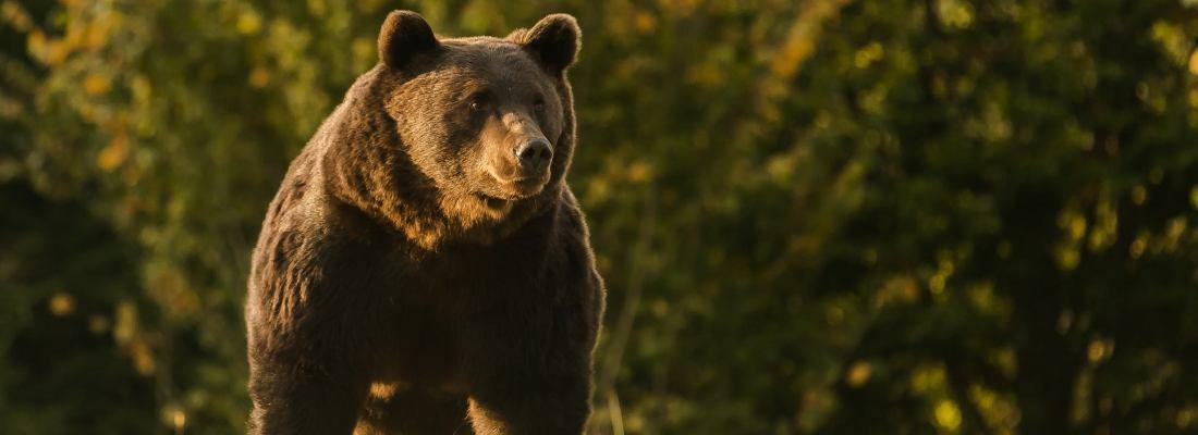 Minunate glume despre impuscarea ursului Arthur