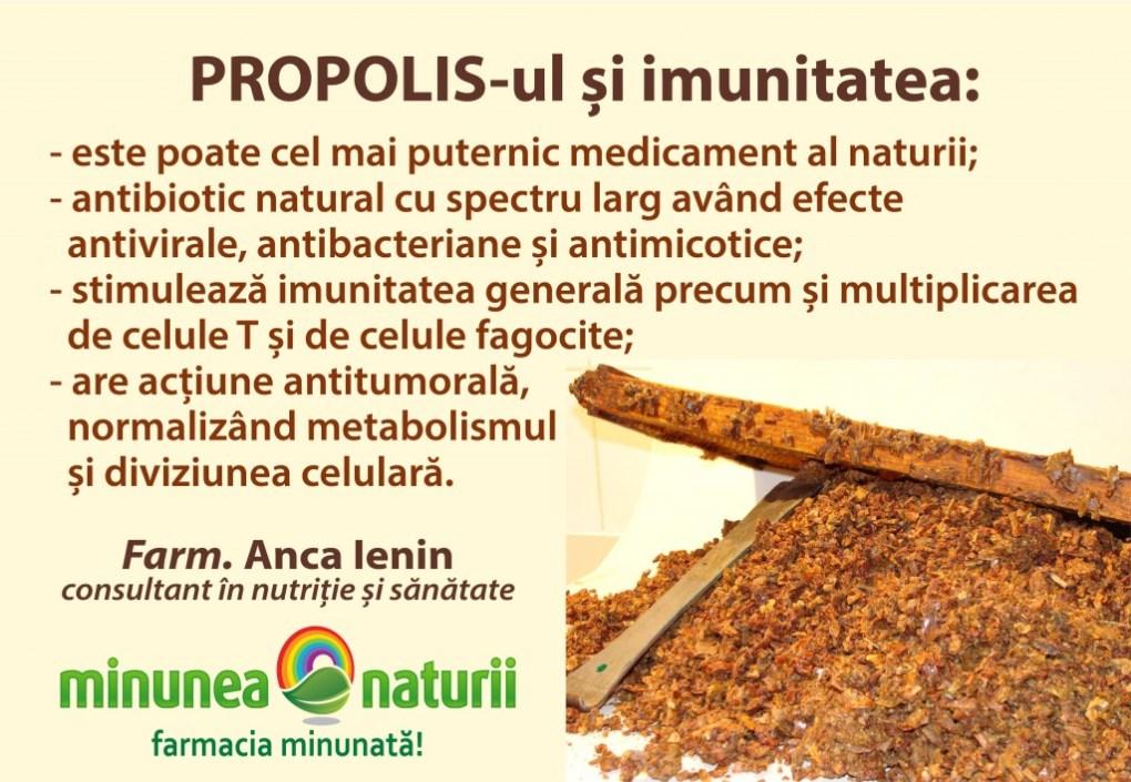 Propolisul si imunitate - Minunea Naturii Farm. Anca Ienin - consultant in nutritie si sanatate