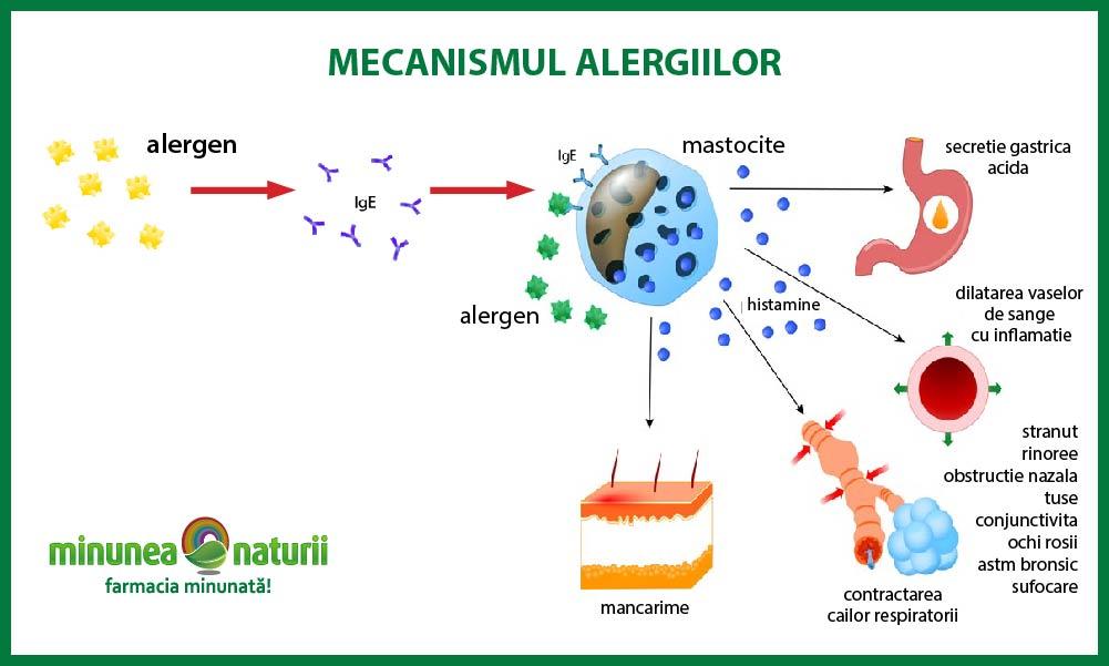 cum se produce o alergie