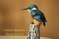 Kingfisher felted bird
