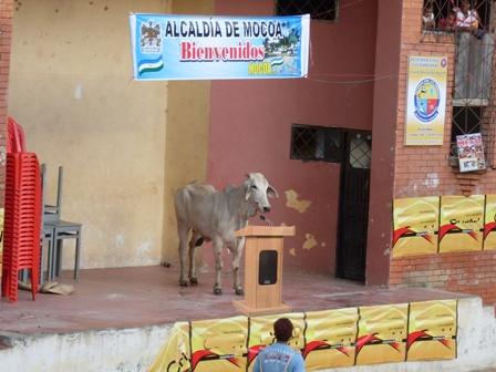 """El toro que """"agarró"""" el puesto central de la improvisada plaza queriéndole quitar protagonismo a uno de los patrocinadores del evento."""
