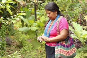 María Rosario Chicunque, durante una visita de campo para aprender el uso de las plantas tradicionales. / ACT