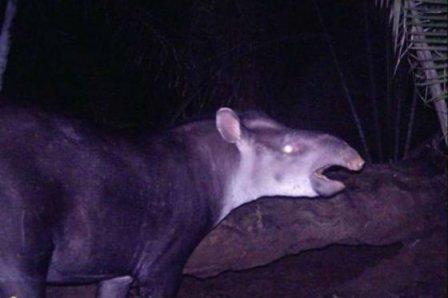 Representa un gran hallazgo porque no es usual el descubrimiento de un mamífero. Foto: Archivo particular